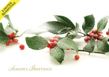Frosted Berries Christmas Card